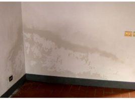 parete umida
